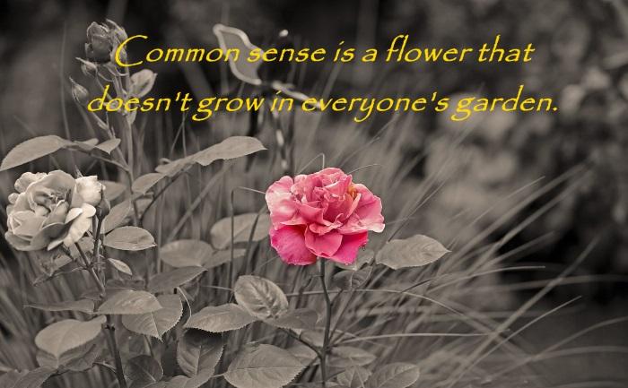 flower-670747_1280
